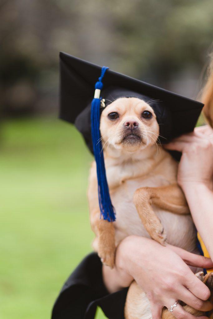 Dog Wearing Grad Cap