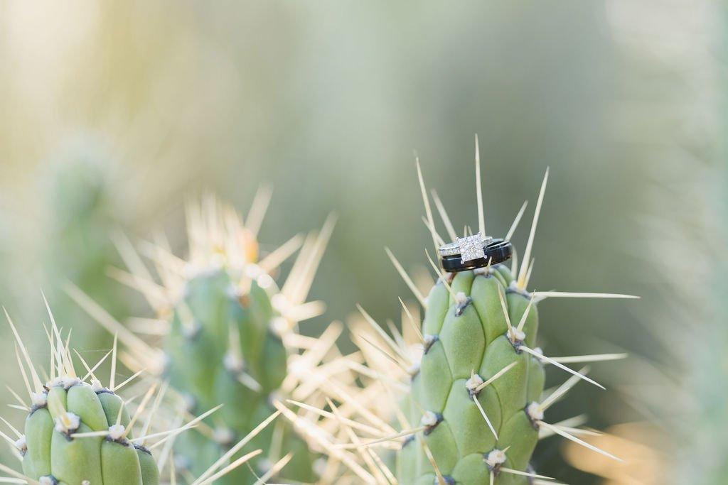 wedding rings on cactus